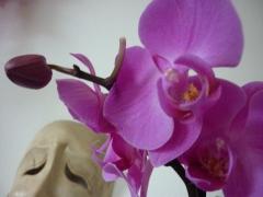 orchidea+mascheraù